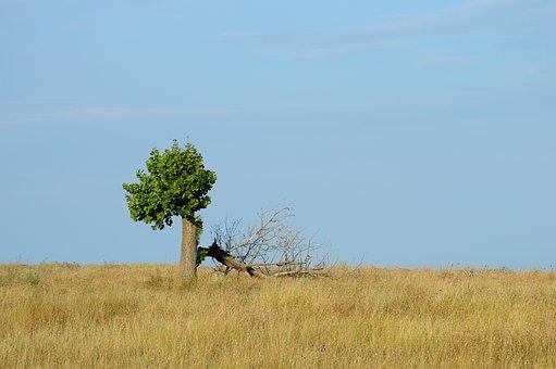 tree-2712562__340